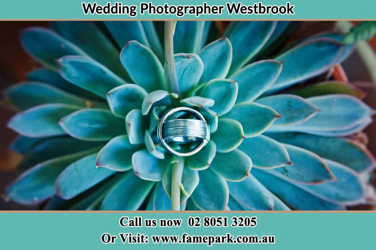 Photo of the wedding ring design at the top of the plant Westbrook NSW 2330